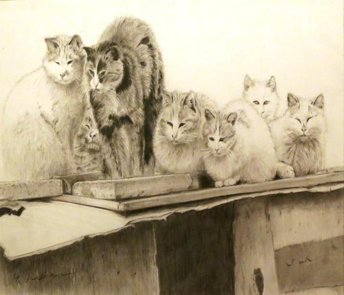 7匹の猫たち